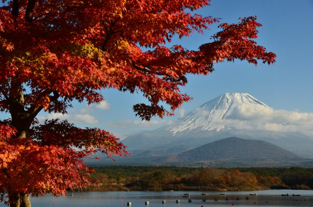 67661aa35d776214dd971512f0131f4a - 鮮やかな紅葉と雪化粧の富士山のコラボレーション