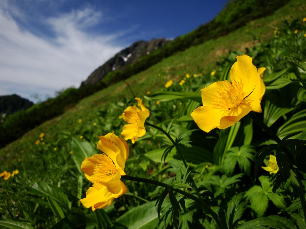 【北岳】2008年07月13日 07:59撮影