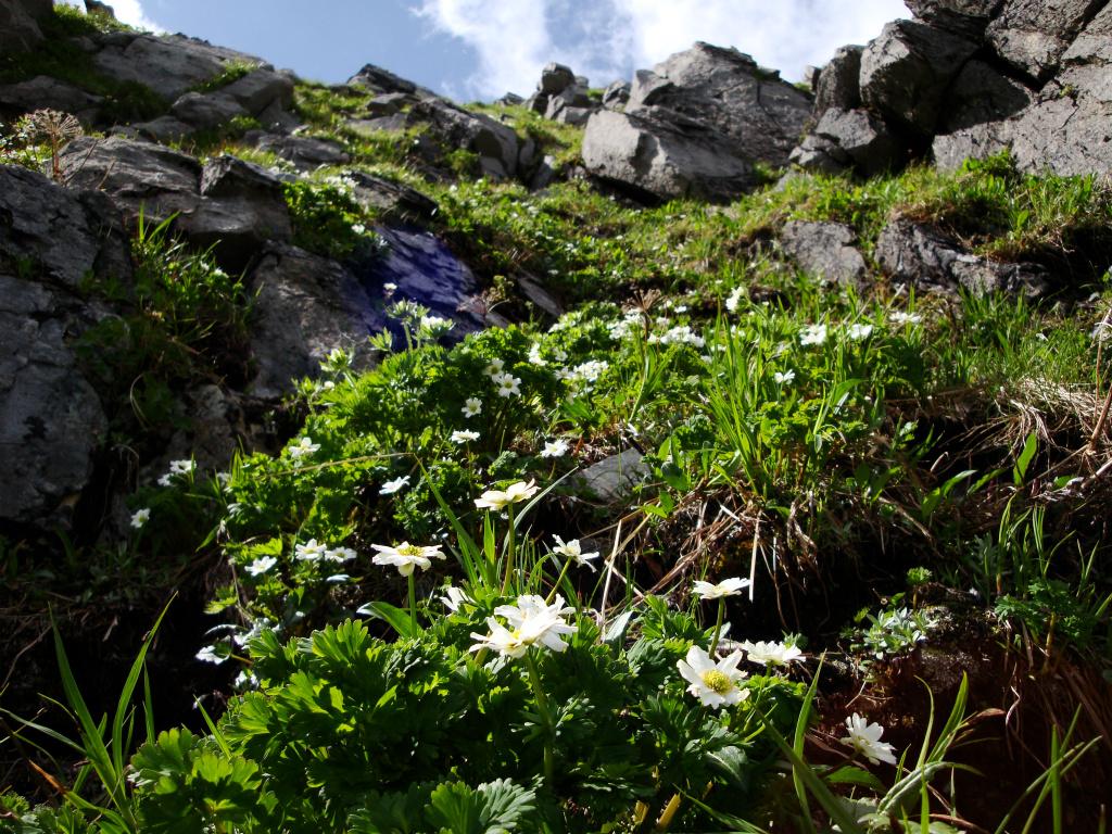 f6a37284216b678fb5da32b630346ae9 - 【おすすめ】南アルプスで撮影した絶景の山岳写真ギャラリー